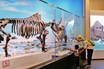 在自然博物馆触摸生态万象的广阔与美好